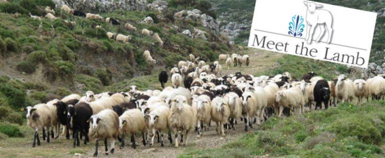 Meet the Lamb   tovima.gr