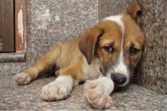Σύλληψη δύο ατόμων που πυροβόλησαν και σκότωσαν σκύλο στη Ζάκυνθο | tovima.gr