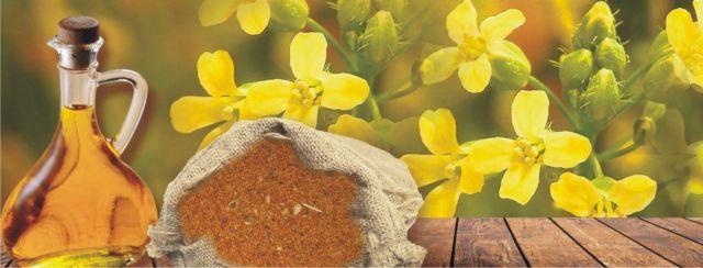 Ξεκινά η καλλιέργεια ελαιοκάμβρης πλούσιας σε ωμέγα 3 λιπαρά οξέα | tovima.gr