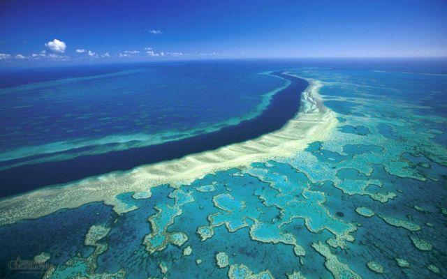 O Μεγάλος Κοραλλιογενής Υφαλος δεν ανασταίνεται αυτή την φορά | tovima.gr