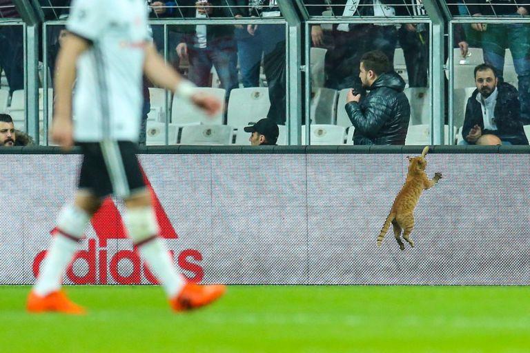 Πρόστιμο από την UEFA στην Μπεσίκτας λόγω μιας γάτας | tovima.gr