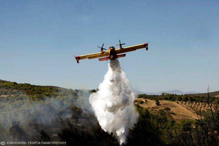 Υπό μερικό έλεγχο η δασική πυρκαγιά στα Διάσελλα Ηλείας | tovima.gr