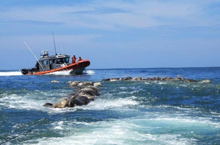 Μεξικό: Νεκρές στις ακτές τριακόσιες θαλάσσιες χελώνες | tovima.gr