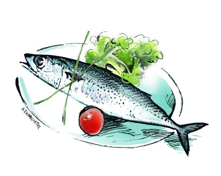 Κάθε ψάρι στον καιρό του και ο κολιός… ποτέ τον Αύγουστο | tovima.gr