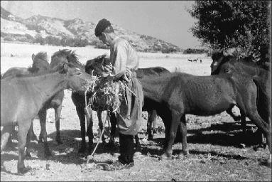 Οι τετράποδοι ιθαγενείς   tovima.gr
