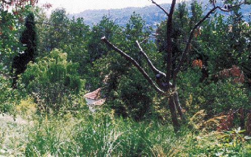 Πώς οι αναδασώσεις καταστρέφουν τα δάση | tovima.gr