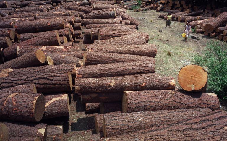 Η παράνομη υλοτομία «φέρνει» δασικές περιπολίες | tovima.gr