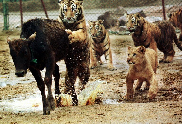 Σε 40 χρόνια ο άνθρωπος εξαφάνισε τα μισά άγρια ζώα του πλανήτη | tovima.gr