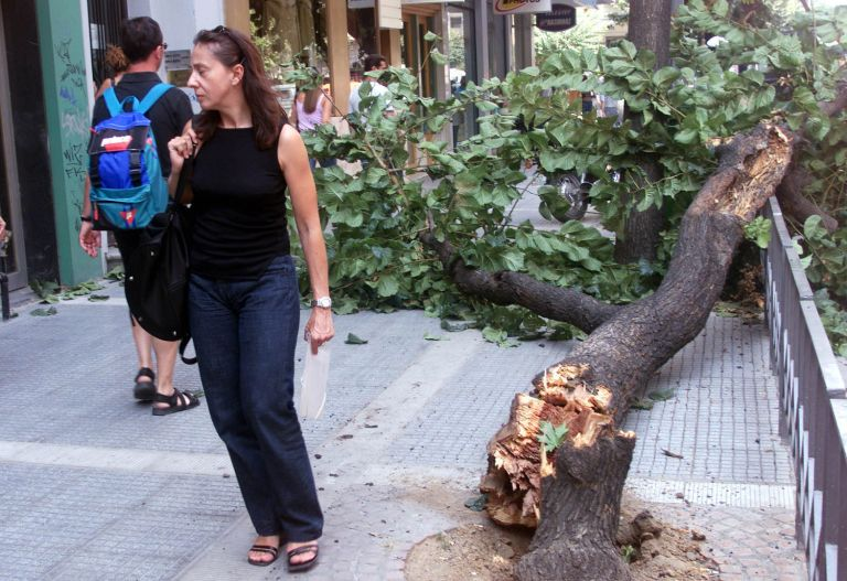 Πλέον των 350 κλήσεων έχει δεχθεί η Πυροσβεστική για πτώσεις δέντρων στην Αττική | tovima.gr