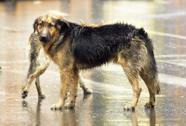 Ανησυχία προκαλεί κρούσμα λύσσας σε σκύλο στην Ελασσόνα | tovima.gr