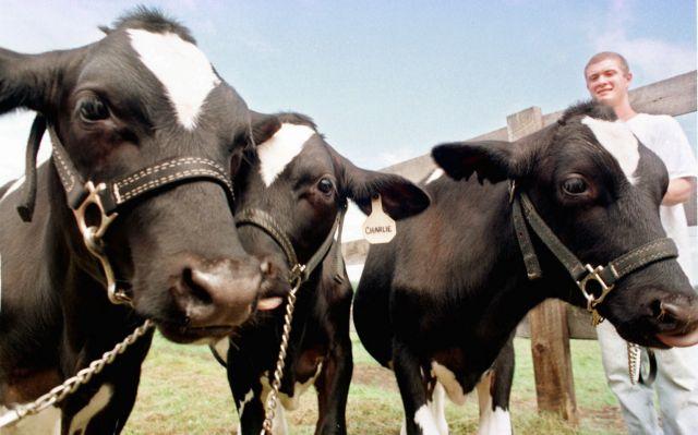 Dairy farmers warn MPs to vote against milk deregulation | tovima.gr