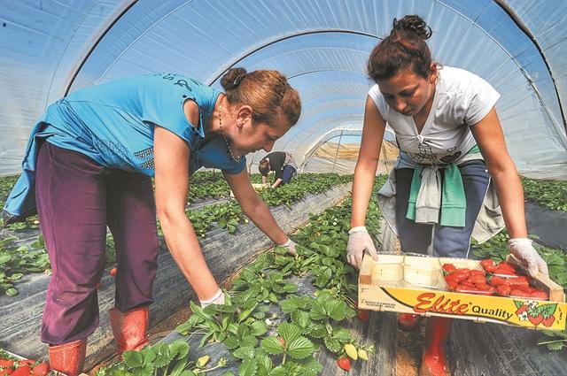 Η αγροτική παραγωγή «χωνεύει» τις καταστροφές | tovima.gr