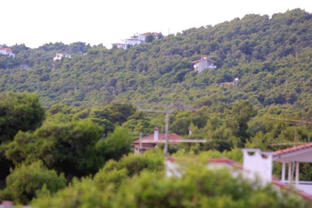 Φύλλο και φτερό η δασική νομοθεσία | tovima.gr