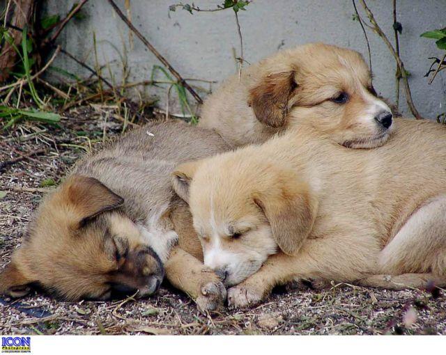 Πυροβόλησαν τρία αδέσποτα σκυλιά στο Λαύριο   tovima.gr