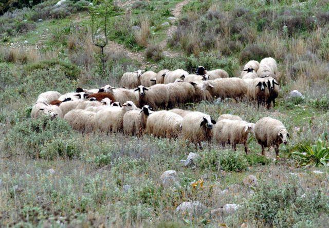 Προειδοποίηση με sms όταν λύκος πλησιάζει τα πρόβατα   tovima.gr