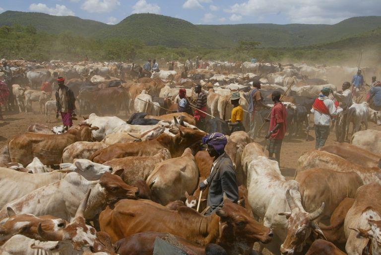 Κένυα: 48 νεκροί σε βεντέτα μεταξύ αντίπαλων χωριών   tovima.gr