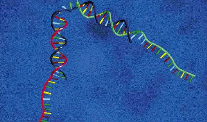 Ο «μετακώδικας», τα γονίδια και οι αριθμοί   tovima.gr