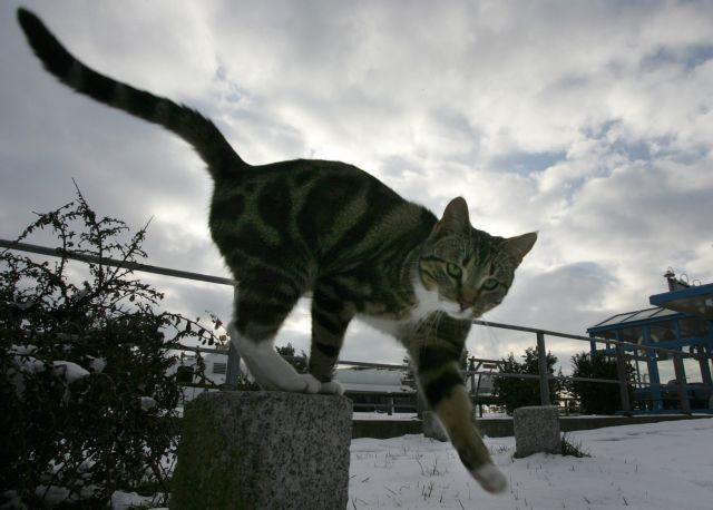 Το όνειρο  της γάτας   tovima.gr