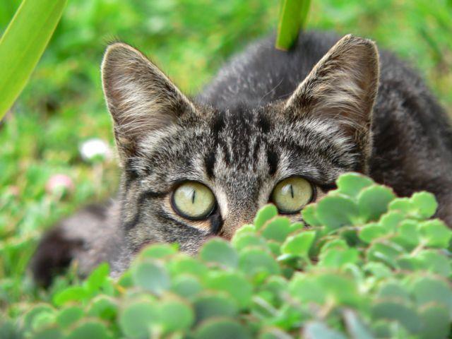 Γιατί οι γάτες έχουν κάθετα σχιστά μάτια | tovima.gr
