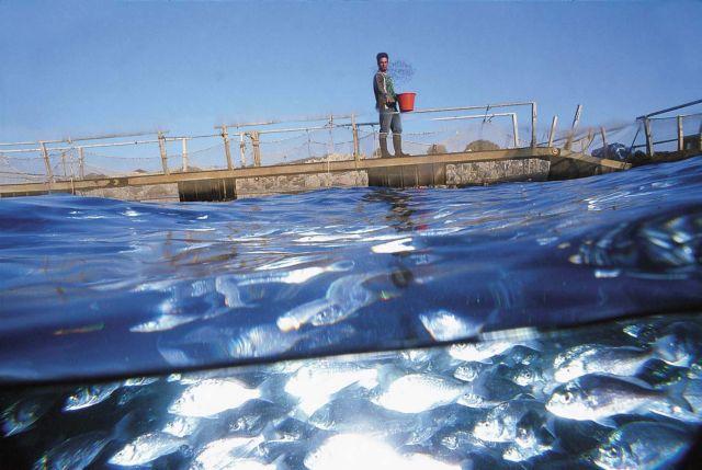 Ζητούν «οξυγόνο» από τις τράπεζες τα ψάρια   tovima.gr