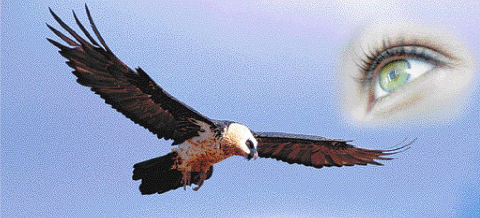 οδυνηρό Πρωκτικό μεγάλο πουλί