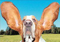Τα γονίδια εξηγούν  τη σκυλίσια συμπεριφορά | tovima.gr