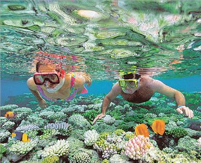 Τα κοράλλια  χάνονται | tovima.gr