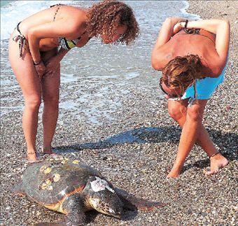 Απροστάτευτες  οι θαλάσσιες  χελώνες | tovima.gr