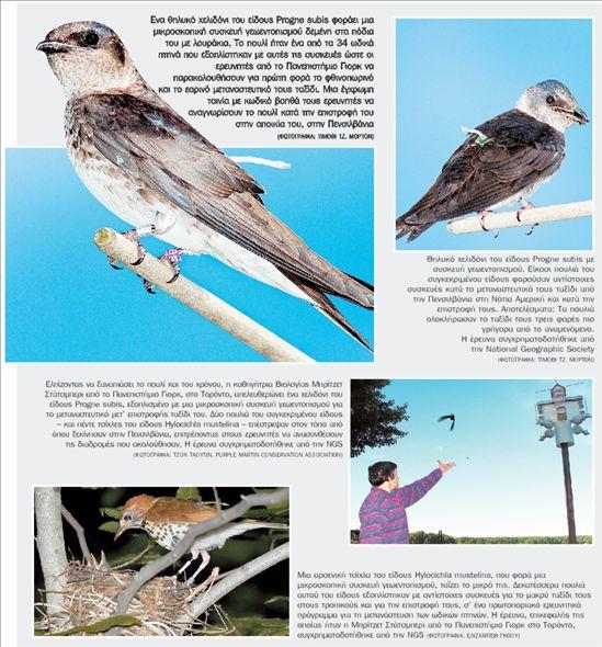 Οσα δεν ξέραμε για τα ωδικά πτηνά | tovima.gr