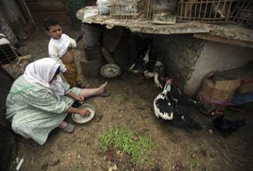 Έξαρση γρίπης των πτηνών στην Αίγυπτο εν μέσω ανησυχίας για τη γρίπη των χοίρων | tovima.gr