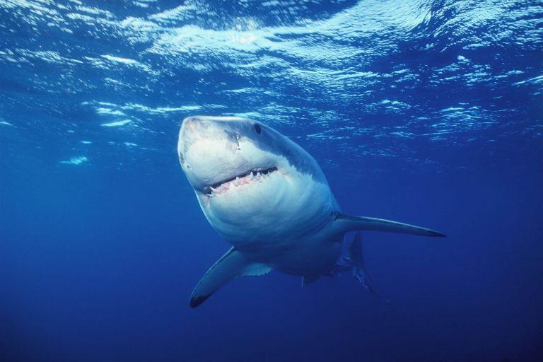 Αυστραλία: Καρχαρίες σπέρνουν πανικό σε δύο πλαζ με κολυμβητές   tovima.gr