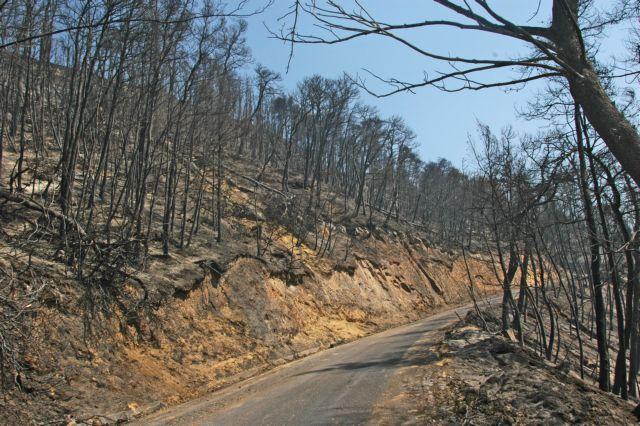 Νομοτεχνική βελτίωση στη διάταξη για τις αναδασωτέες εκτάσεις | tovima.gr