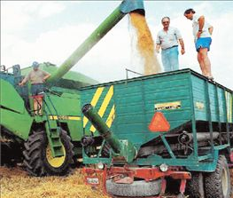 Δημητριακά: Κατρακυλούν οι τιμές, δεν καλύπτεται το κόστος παραγωγής | tovima.gr