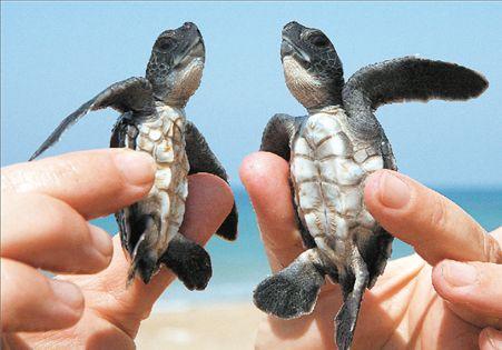 Καταφύγιο της χελώνας οι ακτές της Κύπρου | tovima.gr