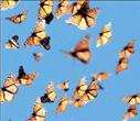 Οι πεταλούδες  έχουν… GΡS | tovima.gr