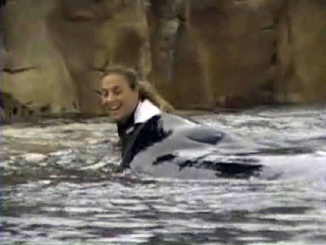 Ξαναπιάνει «δουλειά» η δολοφόνος φάλαινα | tovima.gr
