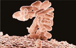 Τα χίλια βακτήρια που ζουν στο έντερό μας   tovima.gr