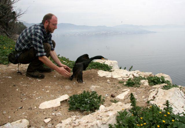 Το φυτοπλαγκτόν «εξαφανίζει» τον θαλασσοκόρακα   tovima.gr