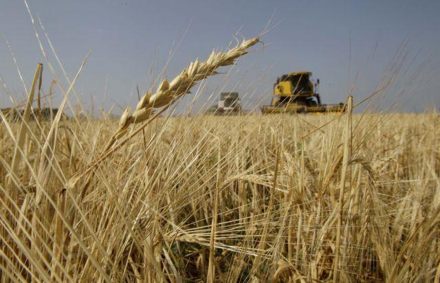 Οι βροχές υποβάθμισαν τα σιτηρά – Απώλεια του ειδικού βάρους | tovima.gr