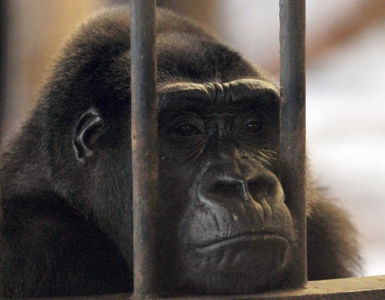 <b>Ευρωκοινοβούλιο</b> Eπιβάλλει αυστηρούς περιορισμούς στα πειράματα σε ζώα στην Ευρώπη | tovima.gr