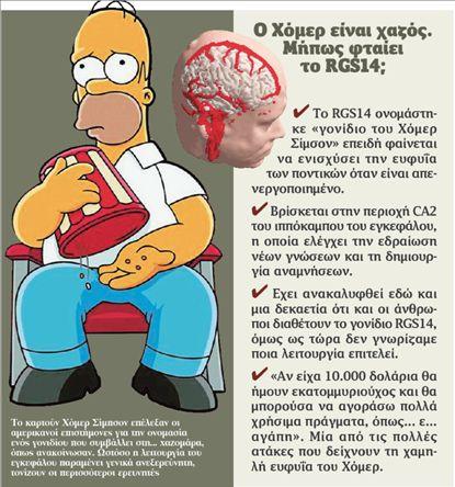 «Χόμερ Σίμπσον», το γονίδιο της… βλακείας | tovima.gr