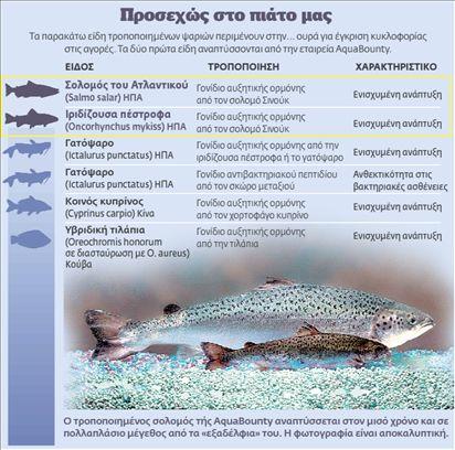 Μεταλλαγμένοι σολομοί κολυμπούν προς το πιάτο μας!   tovima.gr