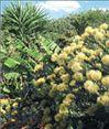 Ενα στα πέντε φυτά  απειλείται με εξαφάνιση   tovima.gr