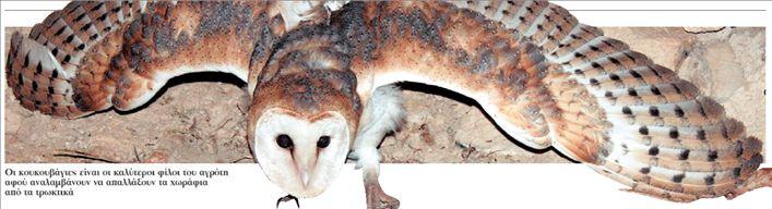 Κουκουβάγιες αντί ποντικοφαρμάκου | tovima.gr
