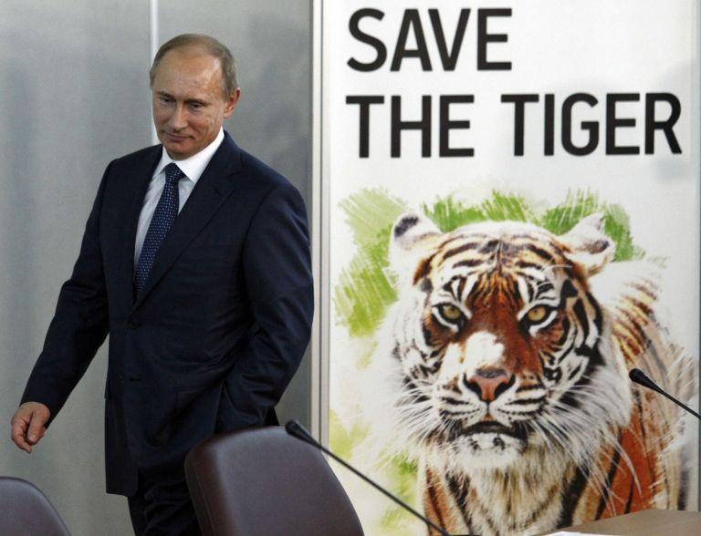 Υποπτες για επιθέσεις σε οικόσιτα ζώα στην Κίνα οι τίγρεις του Πούτιν | tovima.gr