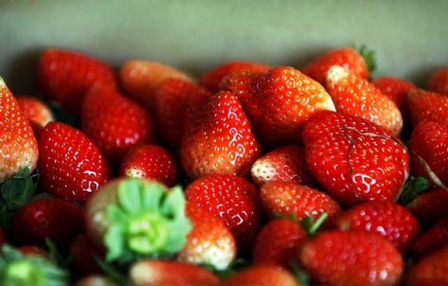Υγρό μετάξι «κρατά φρέσκα τα ευπαθή φρούτα»   tovima.gr