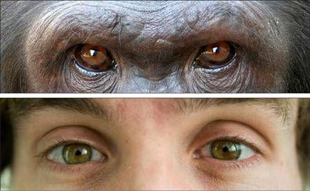 Γερνάμε όπως οι πίθηκοι | tovima.gr