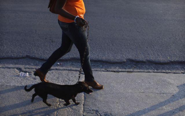 Βόλτα με τον σκύλο σας αντί γυμναστικής | tovima.gr
