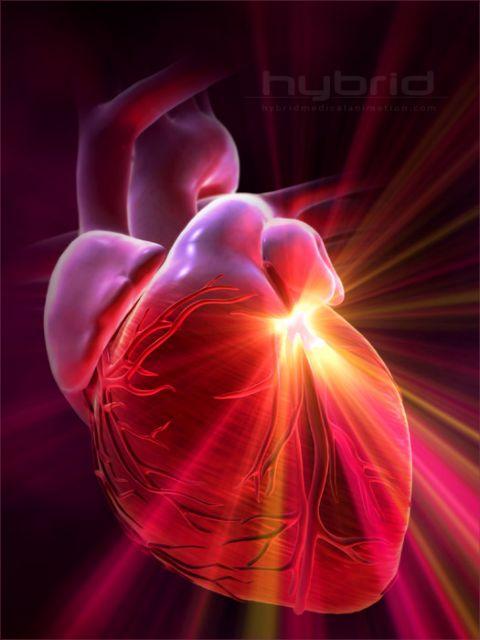 Βλαστικά κύτταρα «συρρικνώνουν» υπερτροφικές καρδιές | tovima.gr