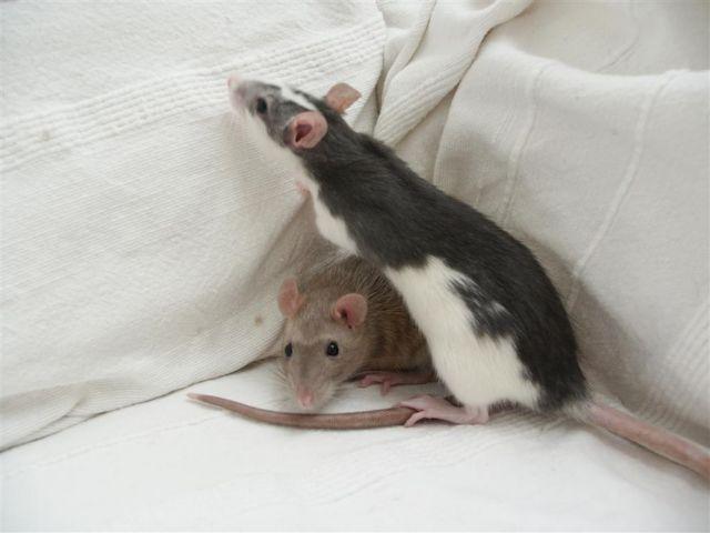 H σεροτονίνη ίσως επηρεάζει τις σεξουαλικές προτιμήσεις   tovima.gr